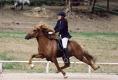 Blivar von Birkenlund  auf der Mitteleuropäischen Meisterschaft 2002 2. Platz im A-Finale Fünfgangpreis: 6,98 Punkte