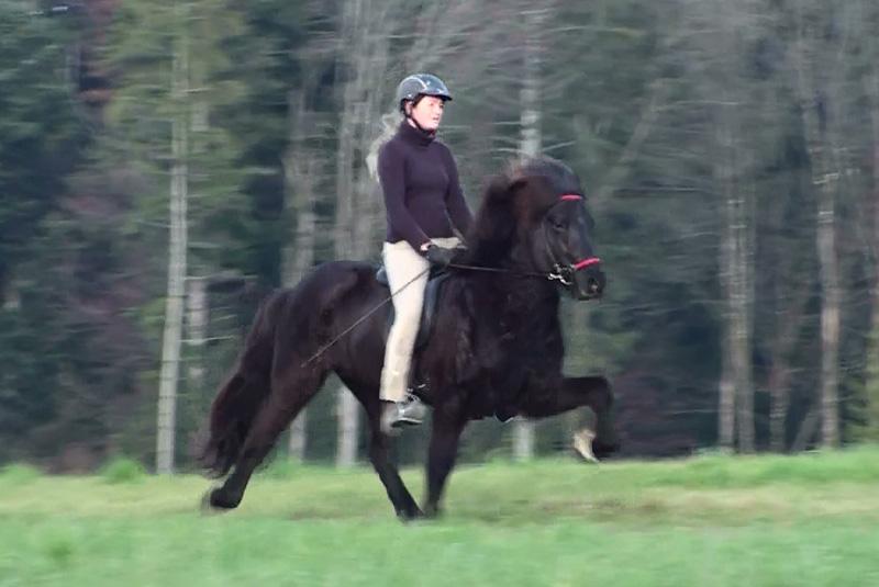 Heljar frá Stóra-Hofi beim Training, November 2009