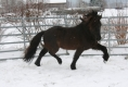 Freude beim Spiel im Schnee Winter 2012