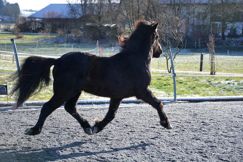 Heljar frá Stóra-Hofi