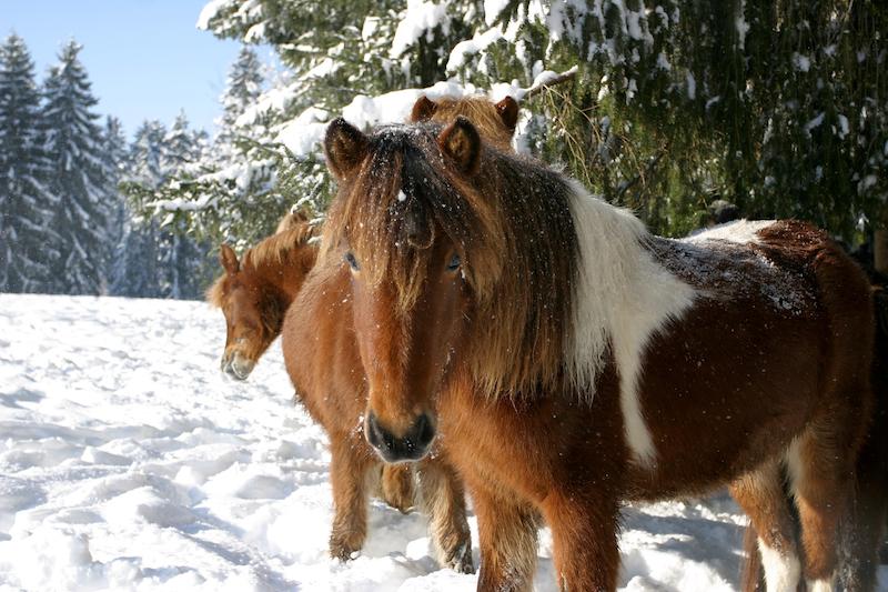 þokkadís begrüsst mich im neuen Jahr