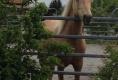Besuch von Rocky Mountain Horse Oakey