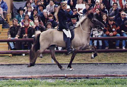 Eik frá Hoftúnum mit Silvia auf der DIM 1997 1. Platz im B-Finale Tölt 1.2 3. Platz im A-Finale Tölt 1.2, mit 7,5 Punkten