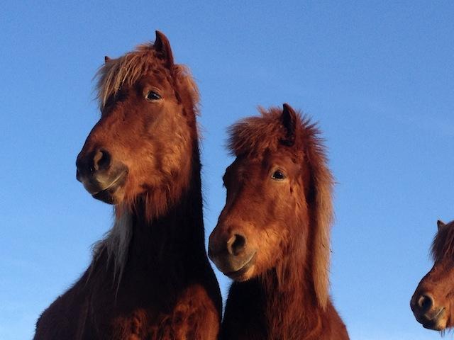 Die Brüder Hrynjandi und Heljar Rauði