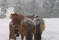 Unsere Pferde im Winter