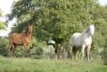 Pferde der Familie Borba 2011