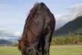 Wer wäre hier nicht gerne Pferd?