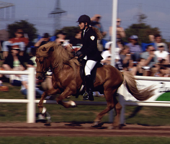 Blivar von Birkenlund  auf der DIM 2004 6. Platz im Fünfgang A-Finale, mit 6,88 Punkten
