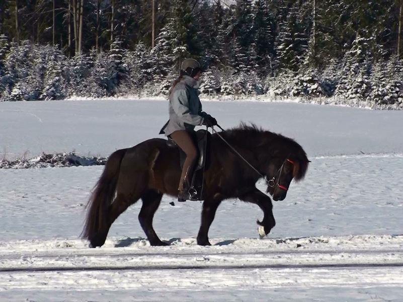 Heljar frá Stóra-Hofi beim Training, Januar 2010