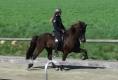 Heljar frá Stóra-Hofi FIZO Wurz, Mai 2011 - Reiteigenschaften 8,21