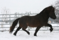 Imposanter Trab Winter 2012