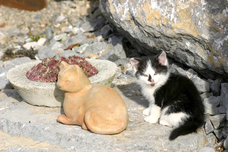 Katzenvariationen