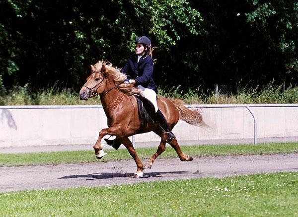 Blivar von Birkenlund mit Silvia auf der DIM 2001, Osterbyholz