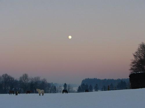 Winteridylle auf Hafnersholt