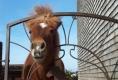 Pferde auf Hafnersholt