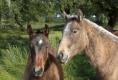 Portugal 2011, Zuchtpferde der Familie Borba